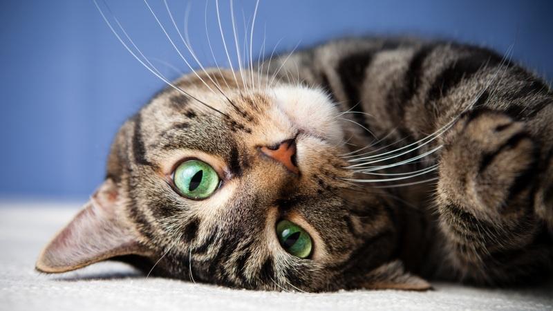 萌猫高清壁纸下载