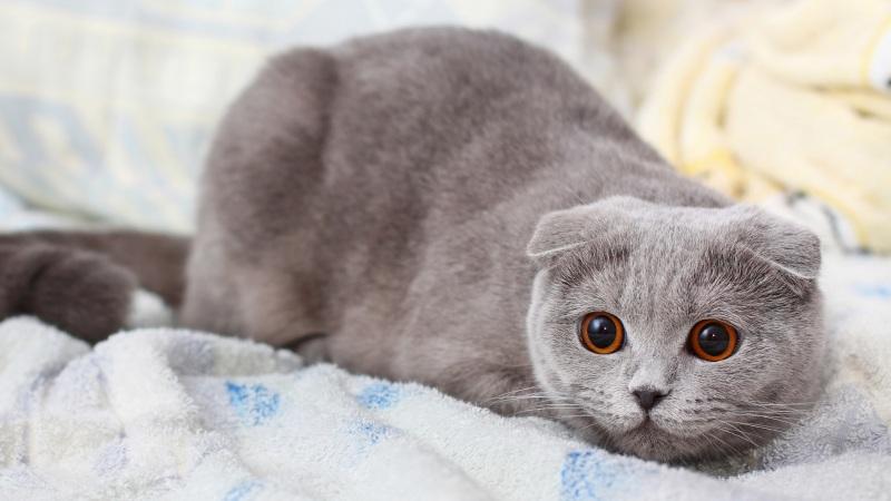 可爱小猫原画高清壁纸下载